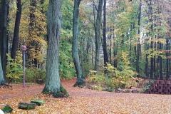 Der Parkplatz mit Blick in den Wald