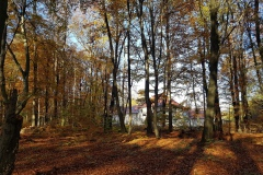 Im Wald mit Blick auf die Anlage