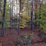 Blick in den Wald aus Zimmer 1