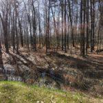 Bad mit Ausblick in den Wald