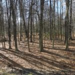 Ausblick in den Wald von Zimmer Nr. 1